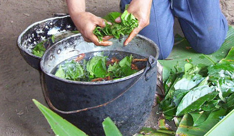 Ayahuasca, Shamanism, and Curanderismo in the Andes