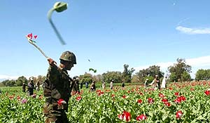 U.S. Turns a Blind Eye to Opium in Afghan Town