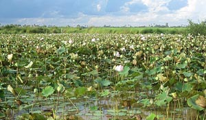 The Land of the Lotus Smokers