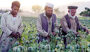 Liberation? - Afghanistan's 2nd Largest Heroin Crop Ever